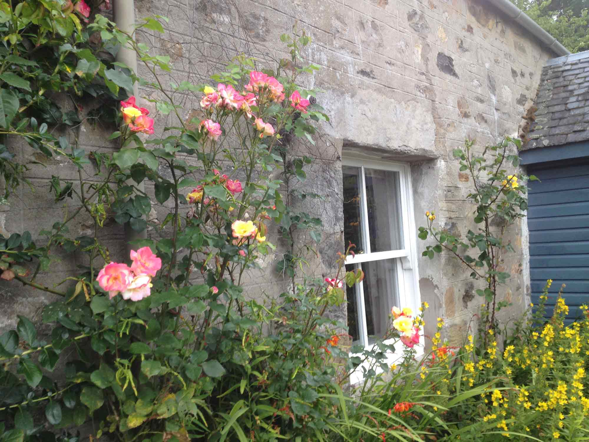 Roses grow up the walls at Rose Cottage